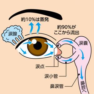 【画像】涙液の流れ_Copyright: Santen Pharmaceutical Co., Ltd.
